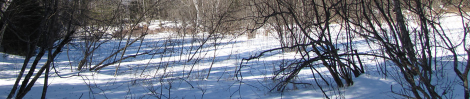 Maine swamp in winter - header